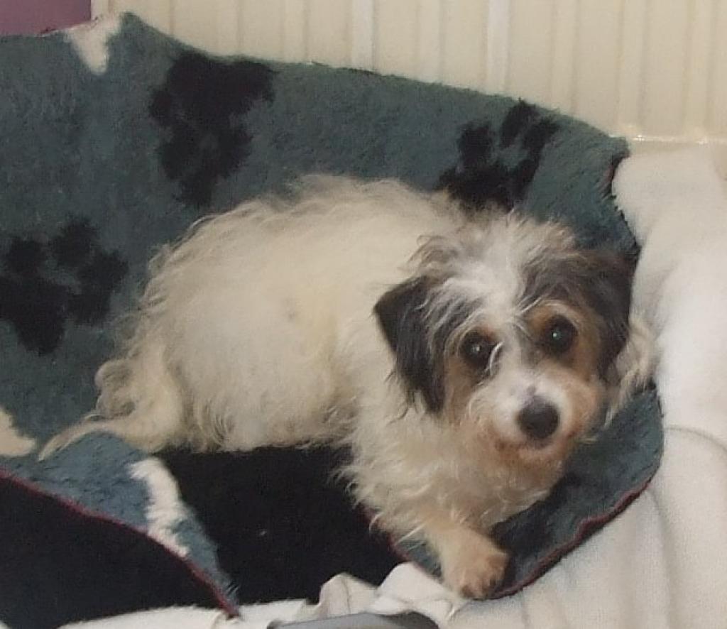 Dog Kennels Thornton